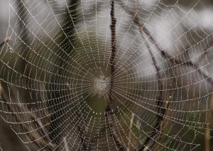 spider-web-1330126-m