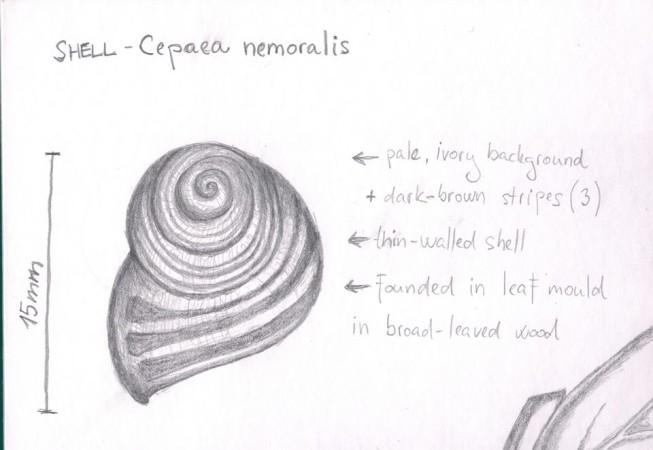 week 2 shell