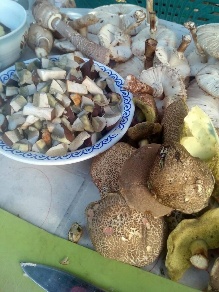 houby říjen
