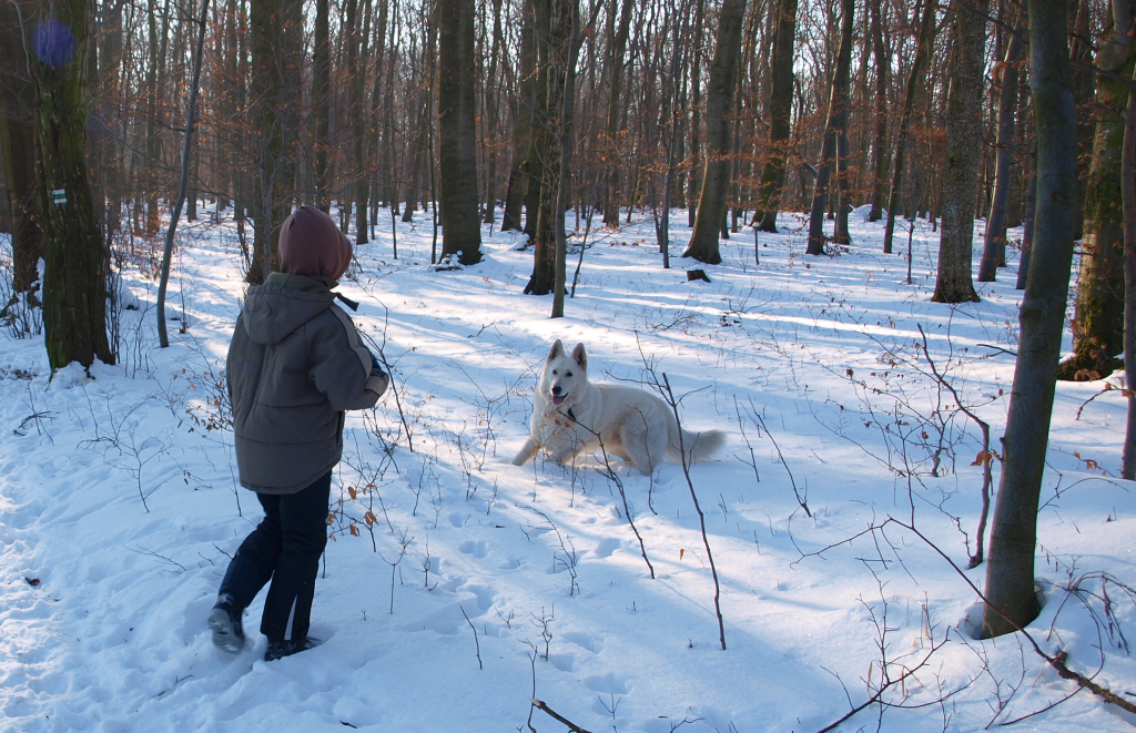 v lese sníh